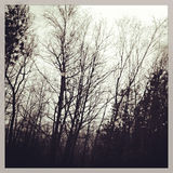 Trees in Motion. With Instagram effect filter Royalty Free Stock Photography