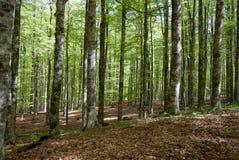 Trees on Mount Amiata Stock Photography