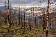 Trees and mountain. Bryce Canyon, USA stock photos