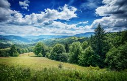 Trees on the mountain. Carpathian, Europe. Stock Photography