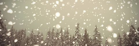 Trees in mountain coated of snow. In winter Stock Images