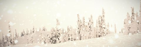 Trees and mountain coated of snow. In winter Royalty Free Stock Images