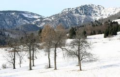 Trees in the mountain and high mountain in the background Stock Images