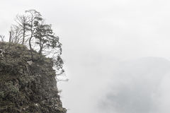 Trees on mountain peak Royalty Free Stock Image