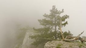 Trees on mountain peak in misty haze. Landscape fog covered mountain peak and coniferous trees at summer morning. stock video