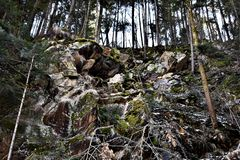Trees On A Mountain. A photo of trees on a mountain area somewhere in Romania Stock Photo