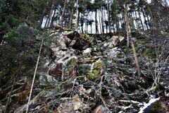 Trees On A Mountain. A photo of trees on a mountain area somewhere in Romania Royalty Free Stock Photos