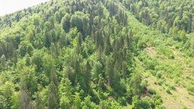 Trees on a Mountain Ridge stock footage