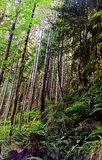 Among the Trees. On a mountain side in Washington royalty free stock images