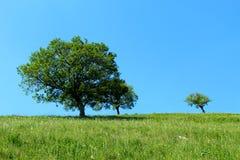 trees on a mountain slope Royalty Free Stock Photos