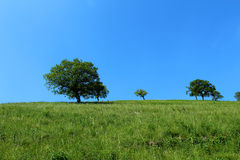trees on a mountain slope Stock Images