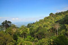 Trees on a mountainous area at Genting Highland Stock Images