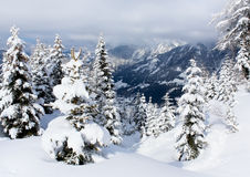 Trees in mountains Stock Photography