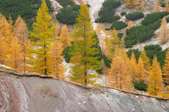 Trees in the mountains Stock Photos