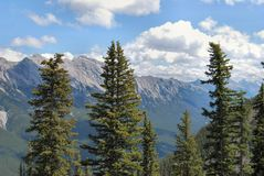 Trees and mountains in Banff National Park Royalty Free Stock Image
