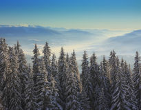 Trees  in the mountains with blue sky. Christmas tree  in the mountains with blue sky and snow Royalty Free Stock Image