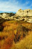 Trees and mountains in California. Burned black trees, red and yellow grasses, and white sandstone mountains against a blue sky in Piedra Blanca, California Stock Images