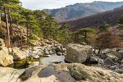 Trees and mountains from Cascade des Anglais in Corsica. View of stream, trees, boulders and mountains from Cascade des Anglais near to Vizzavona on the GR20 royalty free stock image