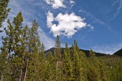 Trees, Mountains, and Clouds Stock Photography