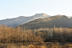 Trees, mountains and grasses in sunlight of autumn afternoon. Royalty Free Stock Photos