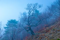 Trees in the mountains on a hillside in an autumn cloudy and foggy day royalty free stock images