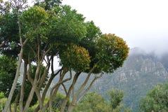 Trees and mountains Stock Photos