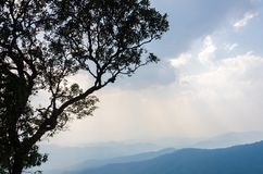 Trees and mountains with a lot of clouds in chaingmai thailand. Doi pui mountains chaingmai thailand Royalty Free Stock Photography