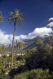 Trees and mountains of Majorca royalty free stock images