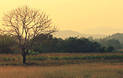 Trees and Mountains Near Mekong in Chiang Khong, Thailand Stock Photography
