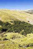 Trees in the mountains of Soria Stock Photos