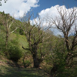 Trees in the mountains in summer time Stock Photography