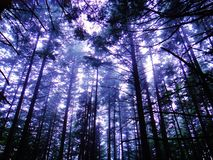 Trees in the Mountains Stock Photography