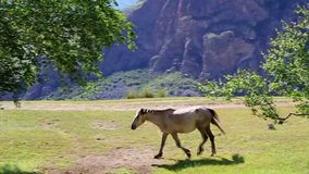 Between trees in the mountains walking horse. Summer day sun stock video footage