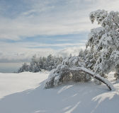 Trees in the mountains in winter Royalty Free Stock Photography
