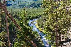 Forest mountains landscape. Yellowstone National park. Trees mountains and Yellowstone river. Green forest. Yellowstone national park, Wyoming,USA royalty free stock photo