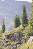 Trees on mountainside Royalty Free Stock Images