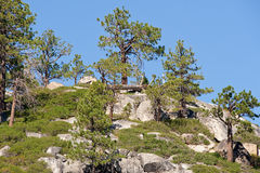Trees on mountainside. Scenic view of trees on mountainside in Sierra Nevada mountains, California and Nevada, U.S.A stock image