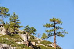 Trees on mountainside. Scenic view of trees on mountainside, Sierra Nevada, mountains, California and Nevada, U.S.A stock photos