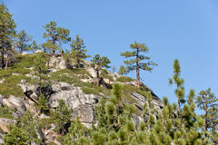 Trees on mountainside. Close up of trees on mountainside near Lake Tahoe, California and Nevada, U.S.A royalty free stock images
