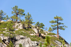Trees on mountainside. Scenic view of trees on mountainside near Lake Tahoe, California and Nevada, U.S.A stock photo