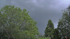 Trees Moving Wild Before The Storm.  stock video footage