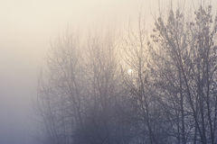 The trees in the mysterious mystical mist. Mood, sadness, apathy, and uncertainty. Landscape Stock Photography