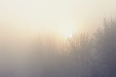 The trees in the mysterious mystical mist. Mood, sadness, apathy, and uncertainty. Landscape Stock Photo