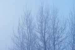 The trees in the mysterious mystical mist. Mood, sadness, apathy, and uncertainty. Landscape Royalty Free Stock Photo