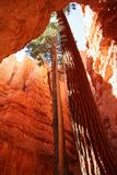 Trees in Narrow Canyon Stock Image