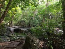 Erawan forest Stock Images
