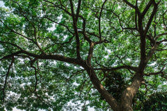 Trees. nature green wood sunlight Royalty Free Stock Image