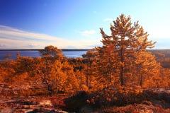 Trees near blue lake Stock Images