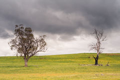 Trees near Bothwell on a Stormy Afternoon Stock Photos
