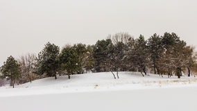 Trees near frozen lake. Some colorful trees located near a frozen lake on a snow day royalty free stock photography